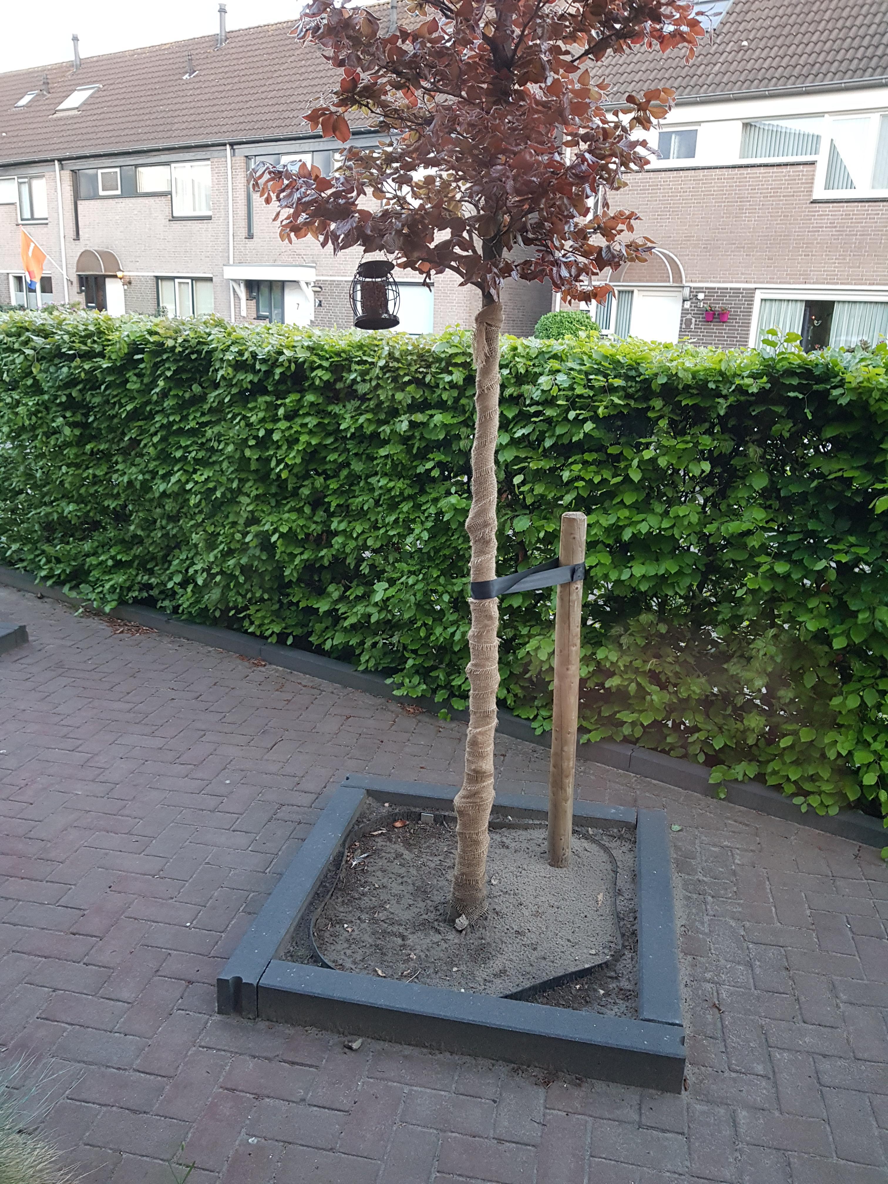Jute band voor boombescherming op rol gebruik: Jute band voor boombescherming op rol